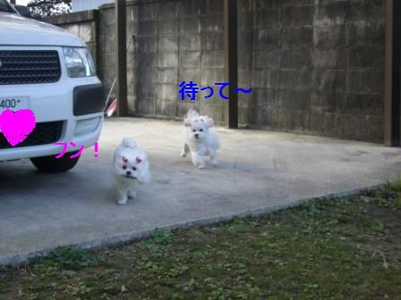 コピー ~ ぽにょ 002