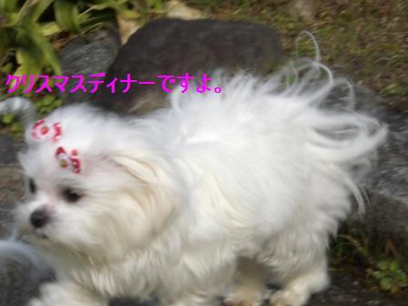 コピー ~ ぽにょ 057