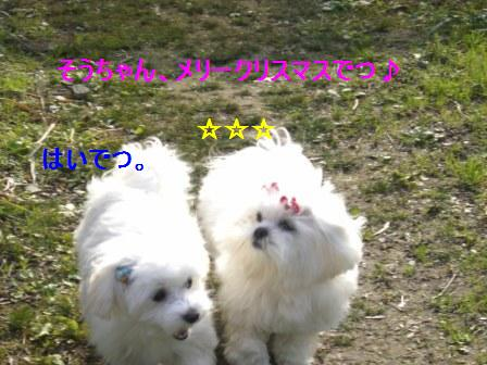 コピー ~ ぽにょ 066