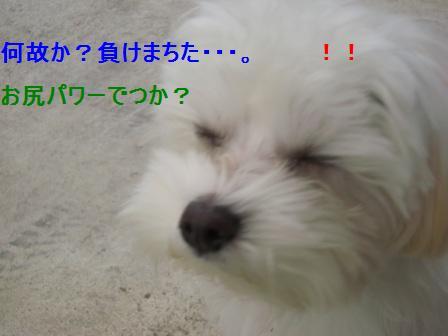 コピー ~ ぽにょ 085