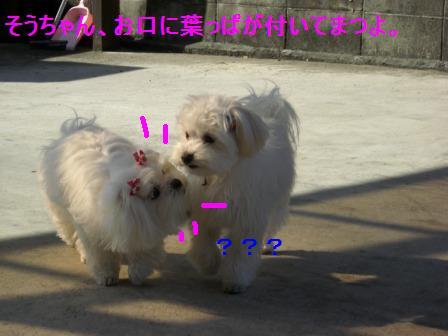 コピー ~ ぽにょ 158