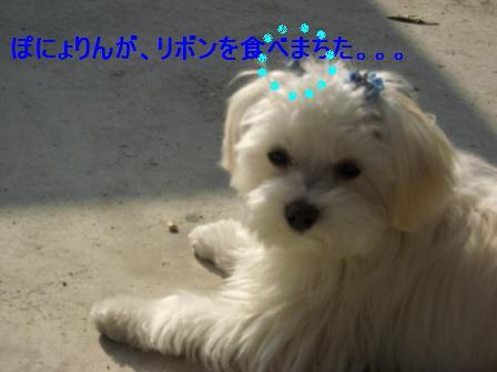 コピー ~ ぽにょ 178