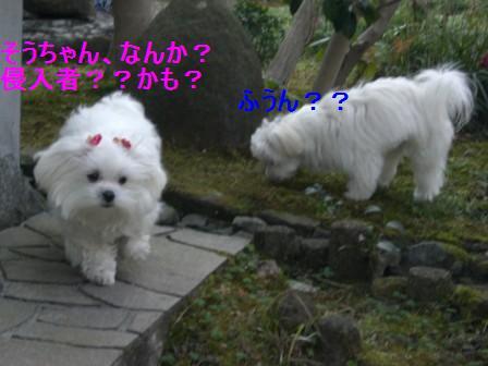 コピー ~ ぽにょ 1303