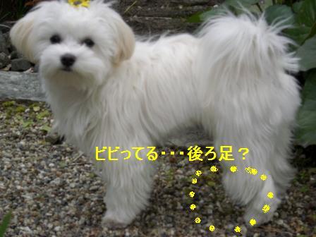 コピー ~ ぽにょ 1354