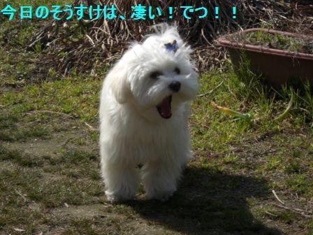 コピー ~ ぽにょ 2105