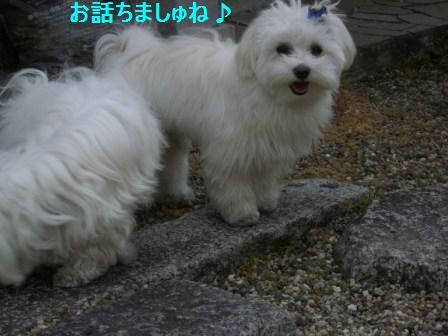 コピー ~ ぽにょ 2112