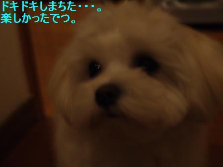 コピー ~ ぽにょ 2955