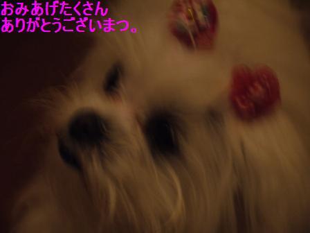 コピー ~ ぽにょ 2956