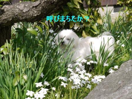 コピー ~ ぽにょ 3474