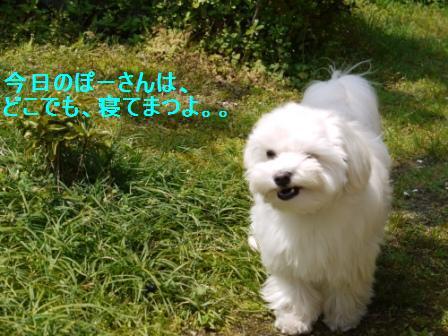 コピー ~ ぽにょ 3614