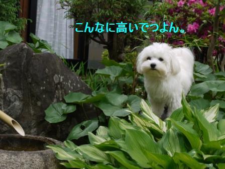 コピー ~ ぽにょ 680