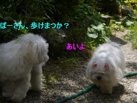 コピー ~ ぽにょ 706