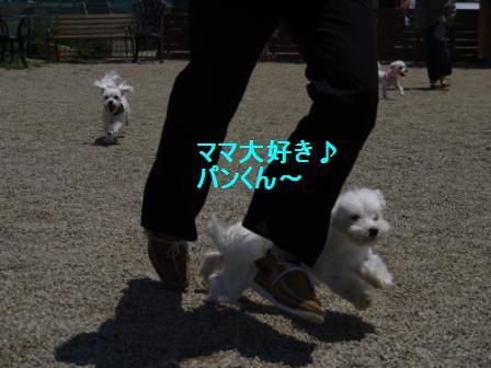 コピー ~ ぽにょ 031