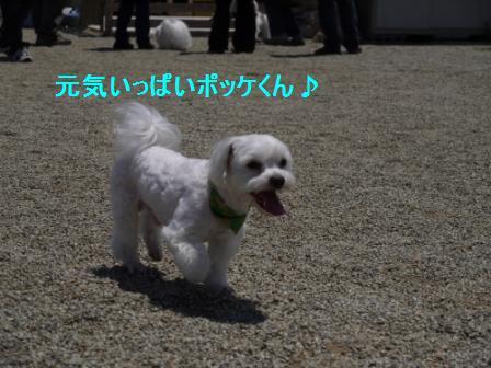 コピー ~ ぽにょ 045