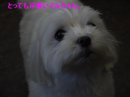 コピー ~ ぽにょ 087