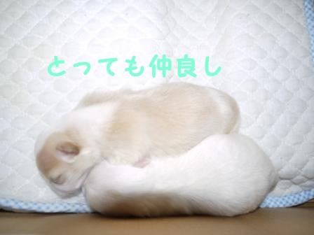 コピー ~ ぽにょ 220