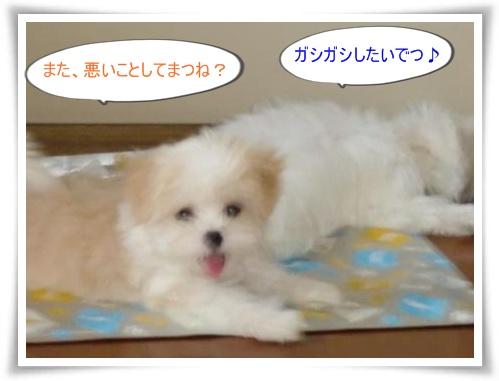 コピー ~ ぽにょ 041