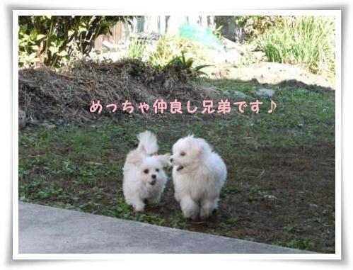 コピー ~ ぽにょ 025