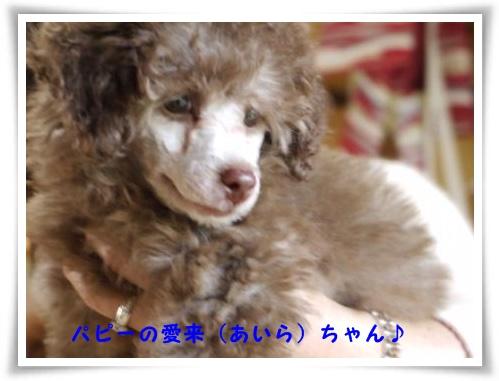 コピー ~ ぽにょ 430