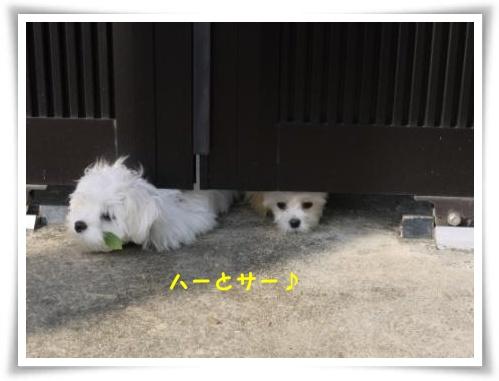 コピー ~ ぽにょ 514