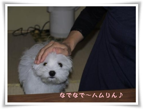 コピー ~ ぽにょ 602