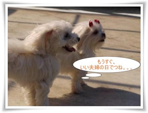 コピー ~ ぽにょ 725