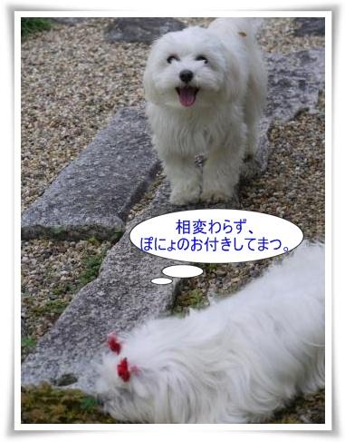 コピー ~ ぽにょ 705