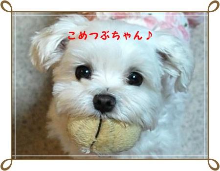 photo_4[1]