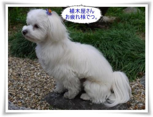 コピー ~ ぽにょ 1106