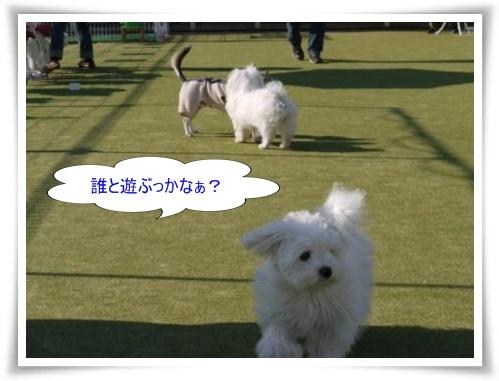 コピー ~ ぽにょ 089
