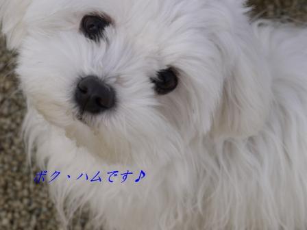 コピー ~ ぽにょ 2282