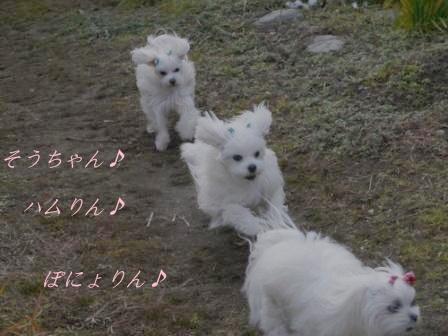 コピー ~ ぽにょ 2703