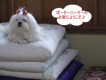 コピー ~ ぽにょ 2852