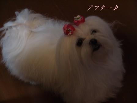 コピー ~ ぽにょ 4821