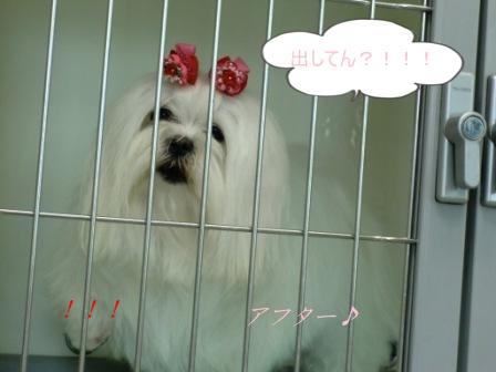 コピー ~ ぽにょ 4546