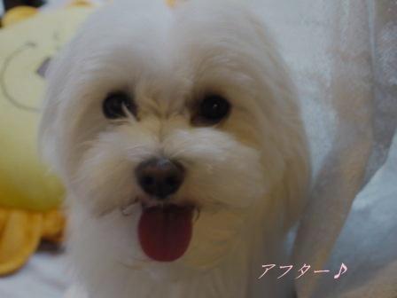 コピー ~ ぽにょ 5481