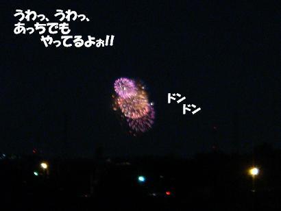 DSC01037.jpg