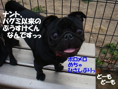 DSC04265.jpg