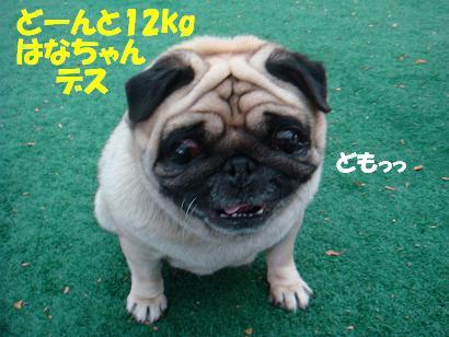 DSC04438.jpg