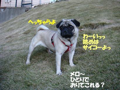 DSC04677.jpg