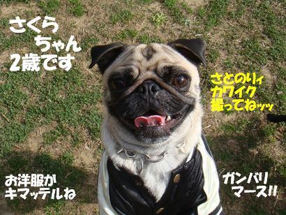DSC06693.jpg
