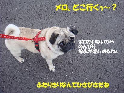 DSC08558.jpg
