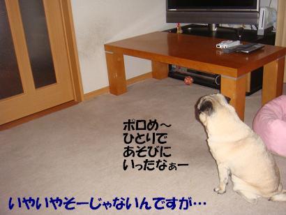 DSC08562.jpg