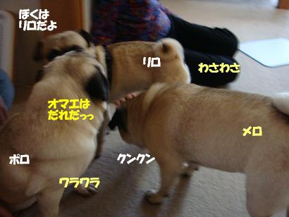 DSC<br />09749.jpg