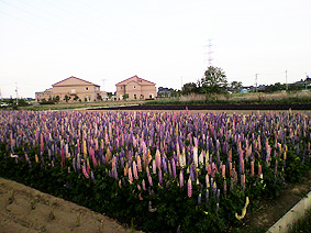 花盛り20110515