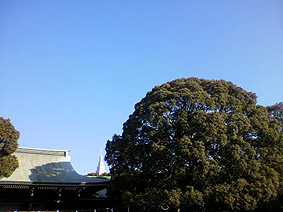 明治神宮20120108