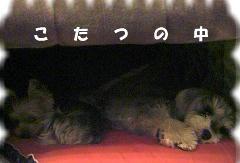 2006_0314画像0003