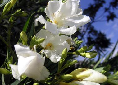 flowers-015.jpg