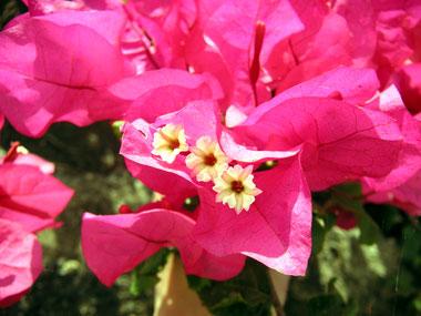 flowers-021.jpg