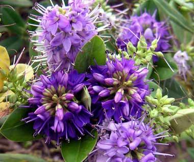 flowers-026.jpg